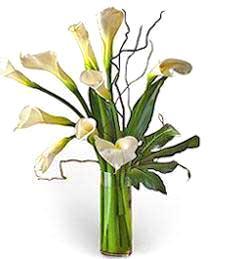 White Callas -- Sympathy