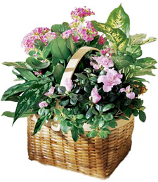 Pink Plant Assortment
