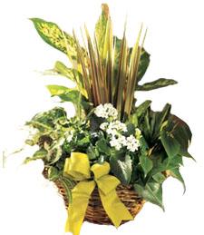 Exotic Plant Delight