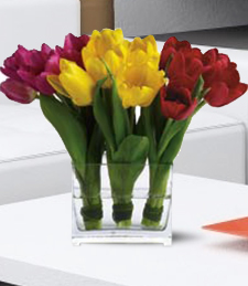A Trio of Tulips on Valentine's Day