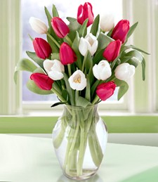 Red and White Valentine's Tulips