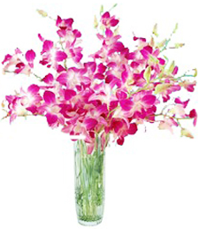 A Windfall of Orchids