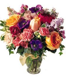 Birthday Flowers of Europe