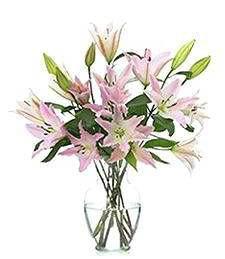 Pink Sympathy, Sympathy Lilies