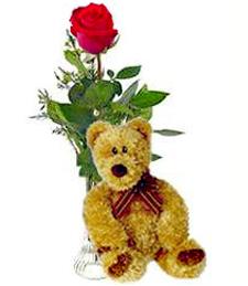Single Red Rose & Bear