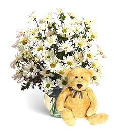 White Daisies and Happy Birthday Bear
