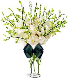 Orchid Paradise Arrangement